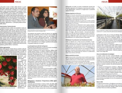 Fruit Journal focus sul melograno e sulla cooperativa Pomgrana